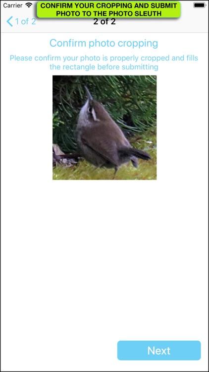 iBird Photo Sleuth screenshot-4