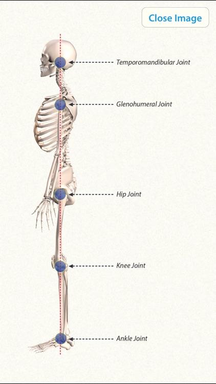 3D Yoga Anatomy screenshot-4