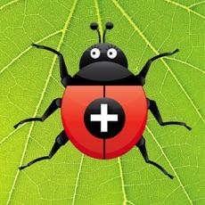 Activities of Ladybug Addition