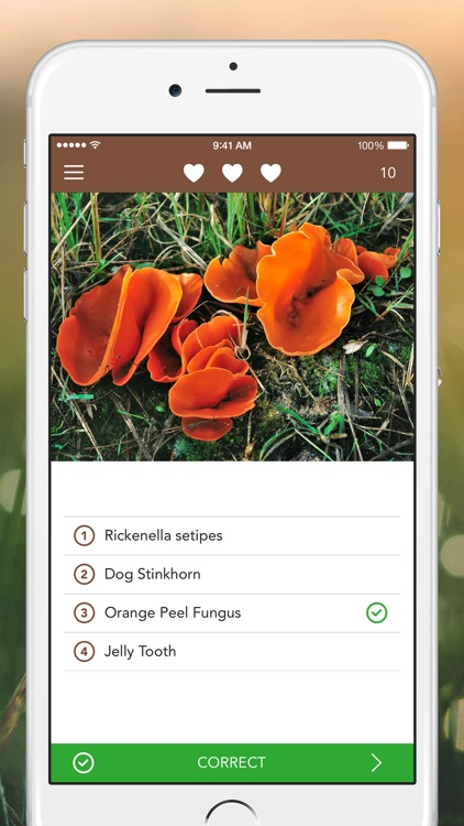 Mushrooms PRO Hunting Safely screenshot-3