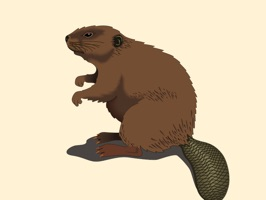 This sticker pack is full of beaver stickers for you to share with family and friends