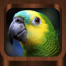Bird Calls : Bird Sounds, Bird Songs & Bird Guide