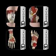 3D4Medical's Body Regions for iPad