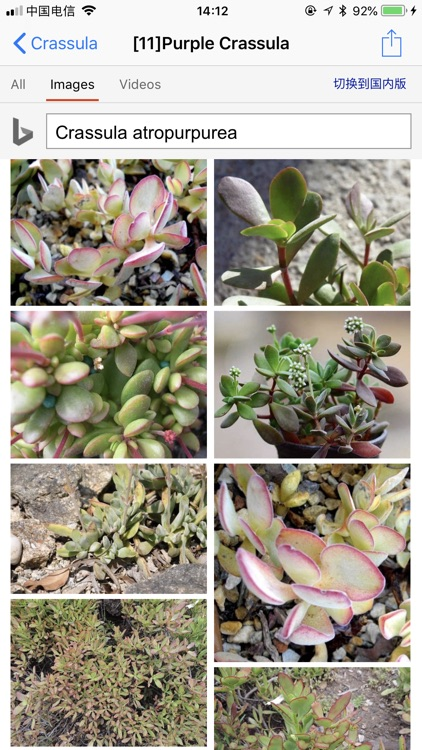 Succulents screenshot-4