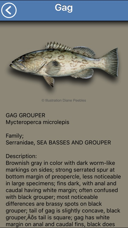 Fish the Gulf screenshot-3