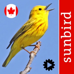 Bird Song Id Canada birdsongs