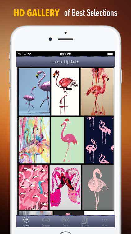 Flamingo Wallpapers Hd Quotes Backgrounds With Art Pictures By Cloudybrain Com