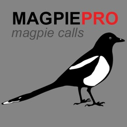REAL Magpie Calls for Hunting + Magpie Sounds! - BLUETOOTH COMPATIBLE