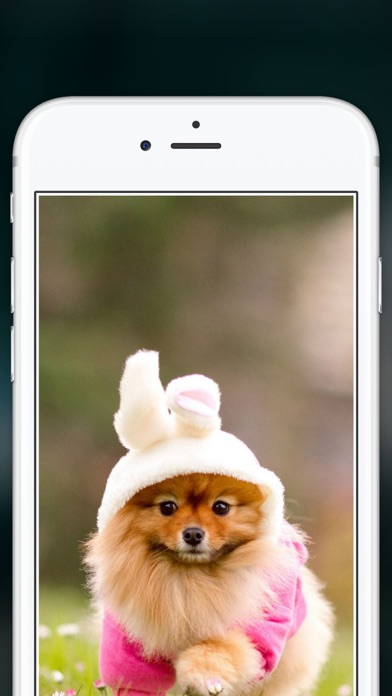Cute Puppies Wallpapers  - dog pictures for free! screenshot two