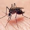 Zika Virus Info Pro