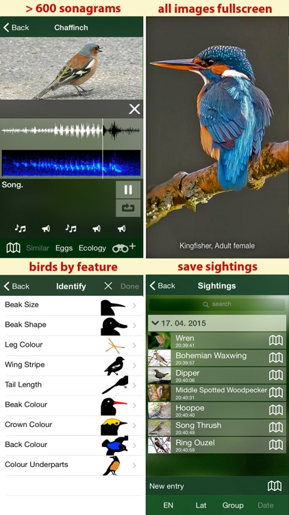 Birds of Switzerland - a field guide to identify the bird species native to Switzerland screenshot-4