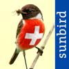 Alle Vögel Schweiz - ein vollständiger Naturführer zu allen Schweizer Vogelarten