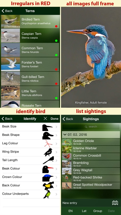 All Birds Sweden - A Complete Field Guide to the Official List of Bird Species Recorded in Sweden