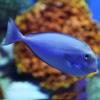 Pro Fishing Champion Sea Games - Shooting Fish