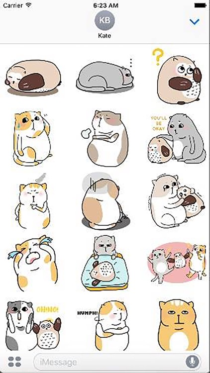 Cat Cute Story
