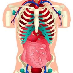Human Body Info