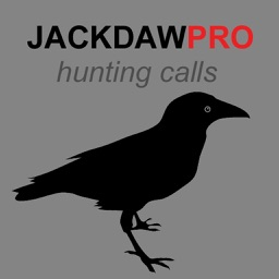 Jackdaw Calls for Hunting - HD