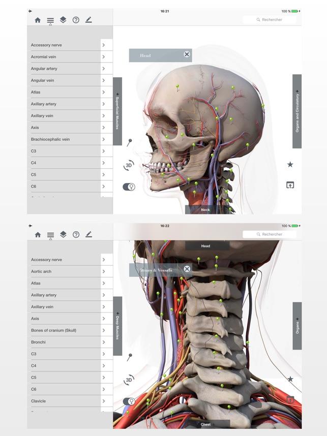 Anatomie Einfach : Lerne Muskeln Skelett & Knochen im App Store
