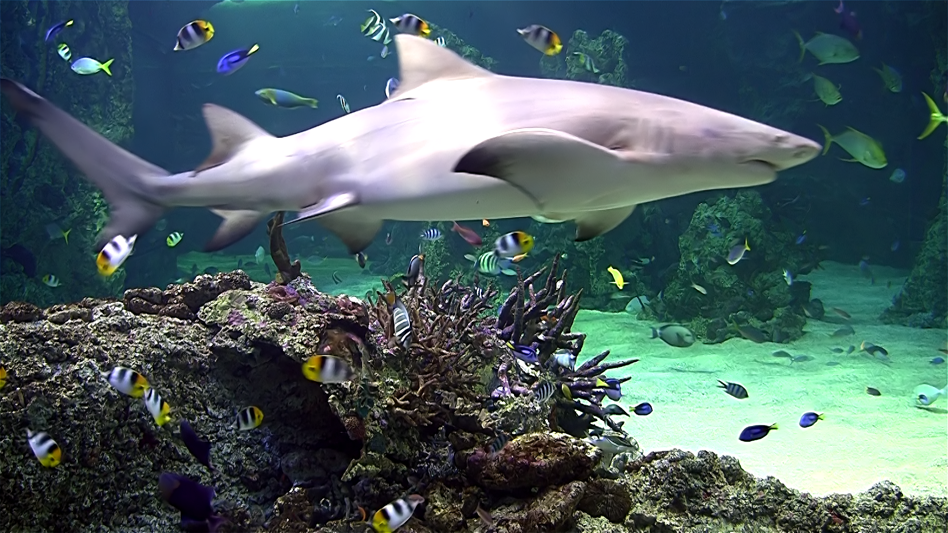 Aquarium live HD TV: Coral reef scenes with relaxing nature & ocean sounds for stress relief screenshot 5