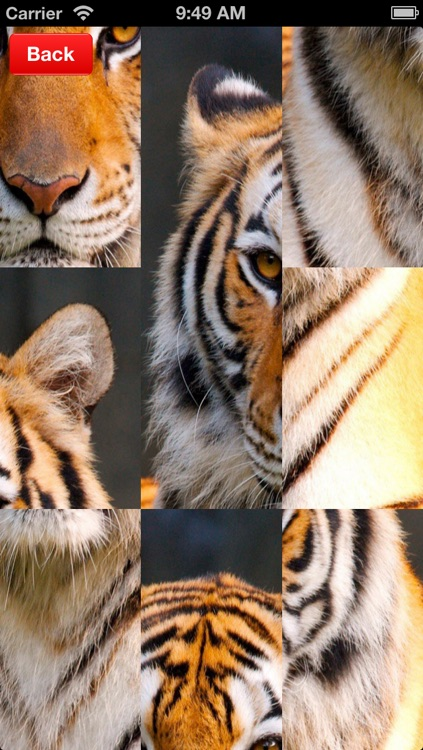 Tiger Puzzles for iPhone