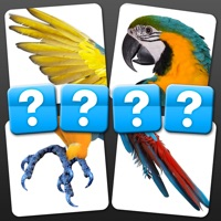 Codes for 4 Pics 1 Word - Close Up Edition Hack