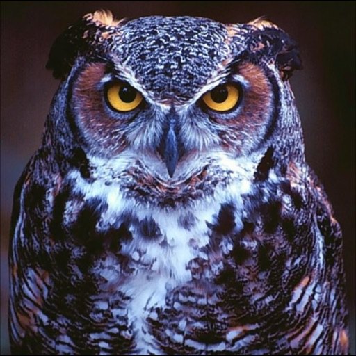 Owls Species icon