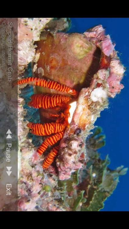 Sea Life Australia screenshot-4