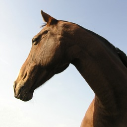 Horsemanship - Equestrian lessons for horse back riders