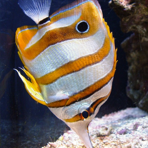 Tropical Fish: Caribbean