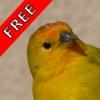 Bird Sounds FREE