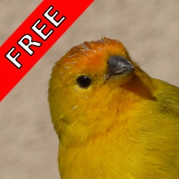 Bird Sounds FREE
