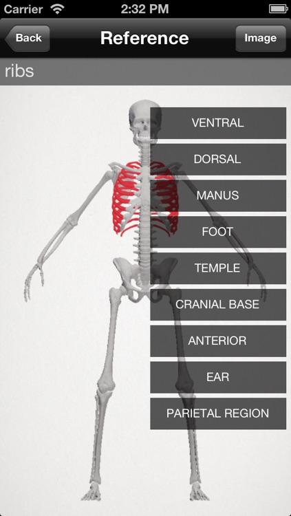 basic anatomy for all [bones]