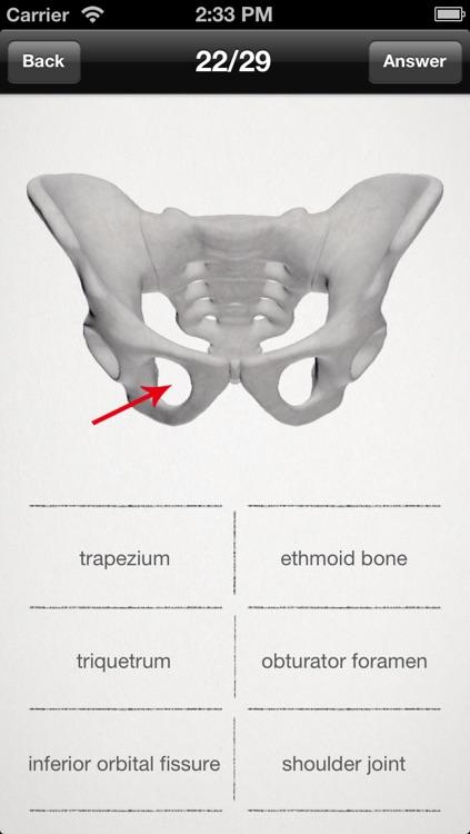 basic anatomy for all [bones] screenshot-3