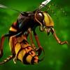 Bugs Mayhem