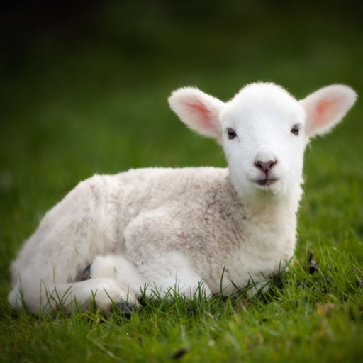 Farm Animal Sounds and Information Free iOS App