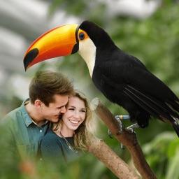Bird Photo Frames - Creative Frames for your photo