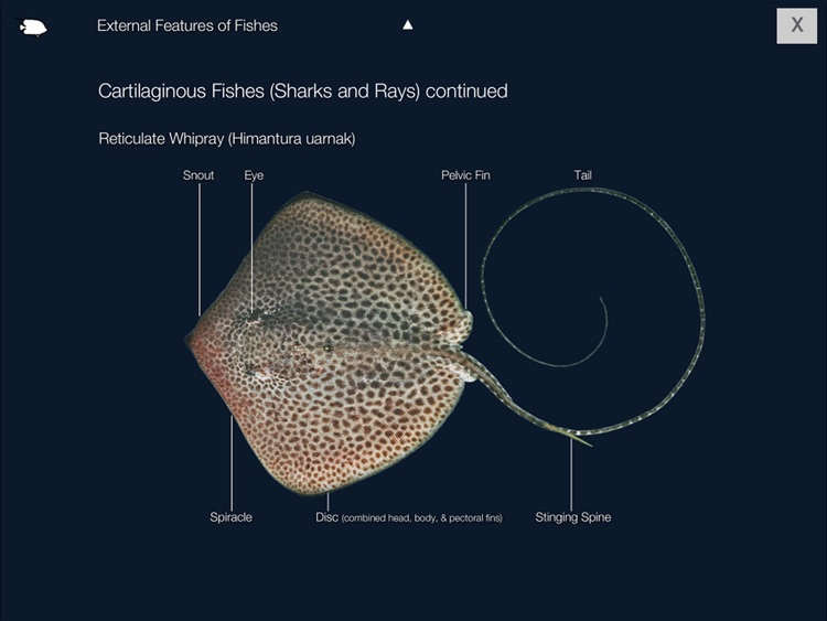 Reef Fishes of the East Indies (Vol. 1) screenshot-3