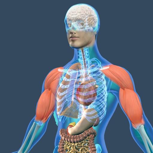 Animated Physiology Human Atlas