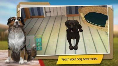 DogHotel Premium Screenshots