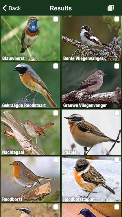 Birds of the Netherlands - a field guide to identify the bird species native to NL and Holland screenshot-3