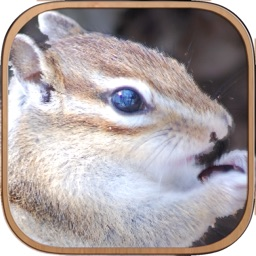 Squirrel Healing Life Free