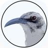 BirdsEye Galápagos - iPhoneアプリ
