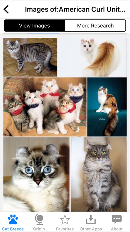 Encyclopedia of Cat Breeds screenshot-3
