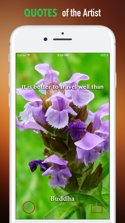 Audubon Wildflowers Wallpapers HD- Quotes and Art screenshot-3