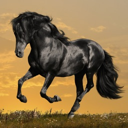 Horse Wallpapers and Backgrounds