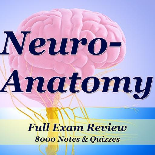 Neuroanatomy Exam Review-8100 Flashcards Study Notes, Terms