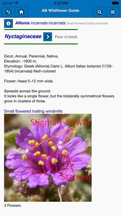 Anza-Borrego Wildflower Guide screenshot-3