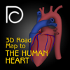 3D Road Map to the Human Heart