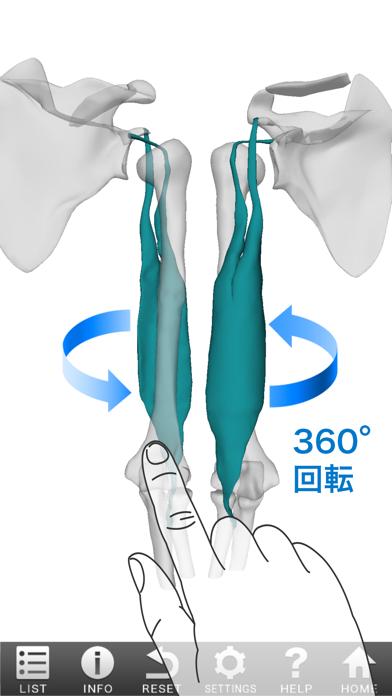 3D筋肉図鑑 ScreenShot0