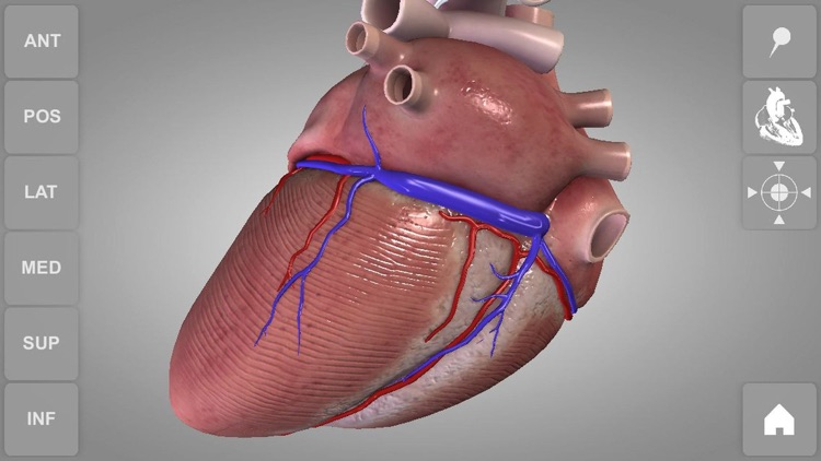 Heart - 3D Atlas of Anatomy screenshot-0